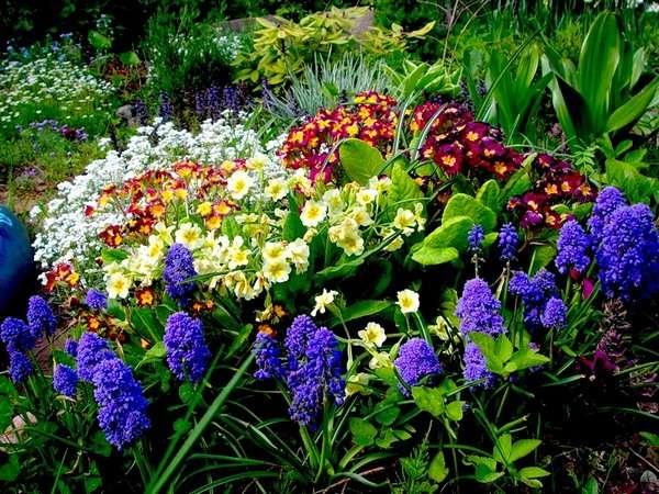 Особенности многолетних цветов