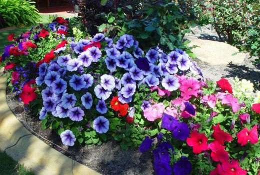 Крупный удаленный цветник с разными растениями