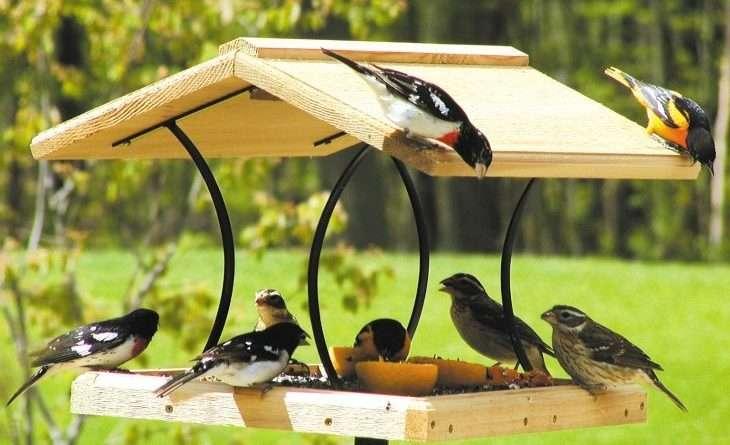 Как сделать кормушку для птиц самостоятельно из подручных средств