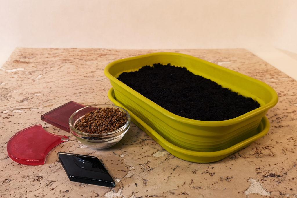 Микрозелень,  что это такое и как вырастить дома?
