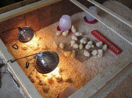 Курятник для разведения птенцов. Расчет и конструкция.
