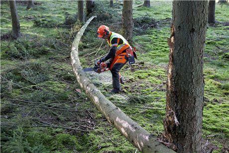 Удаление поваленных деревьев