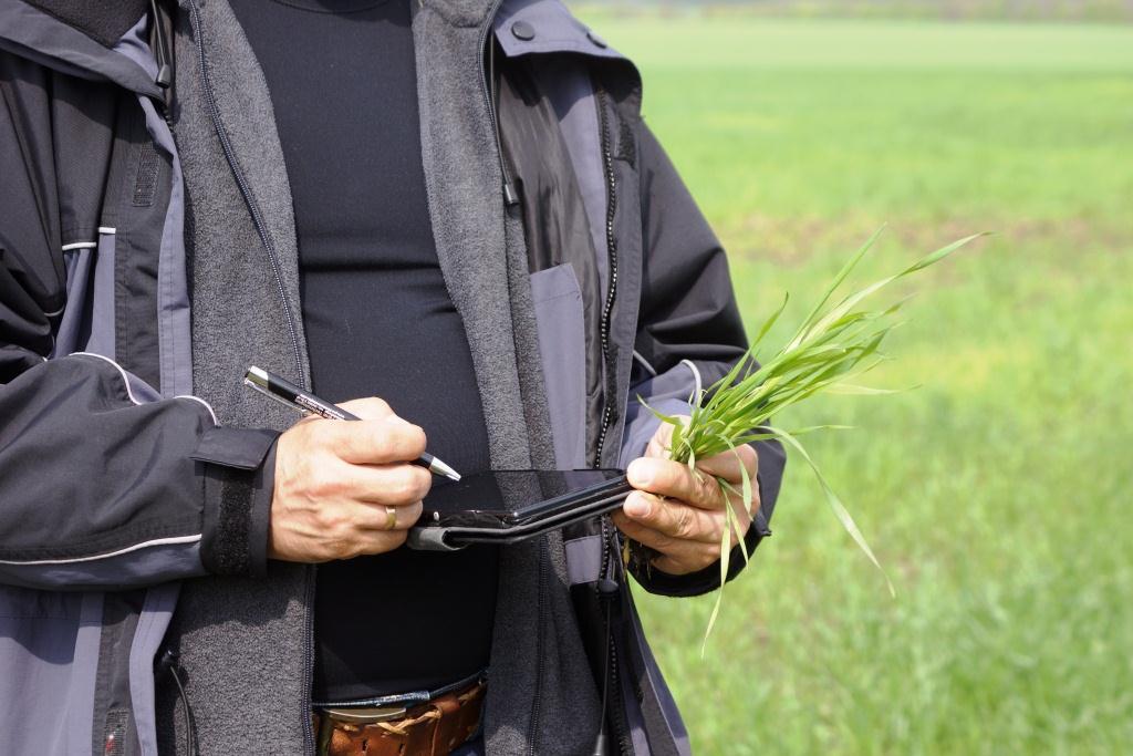 Специфика проведения агрономических консультаций