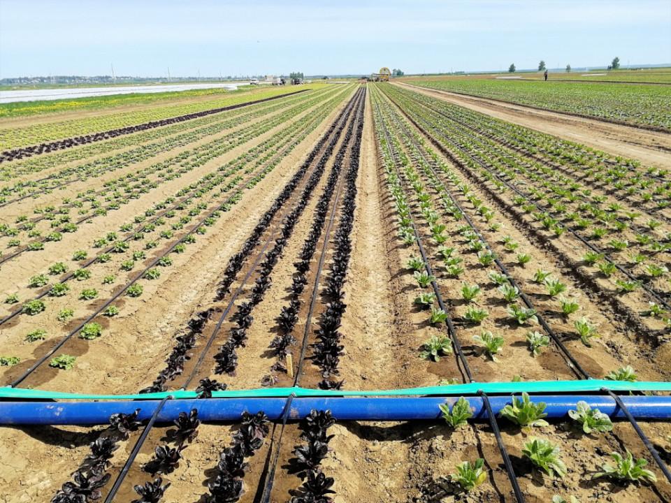 Капельное орошение, оптимальное решение для полива растений