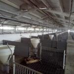 Мини свиноферма в Украине