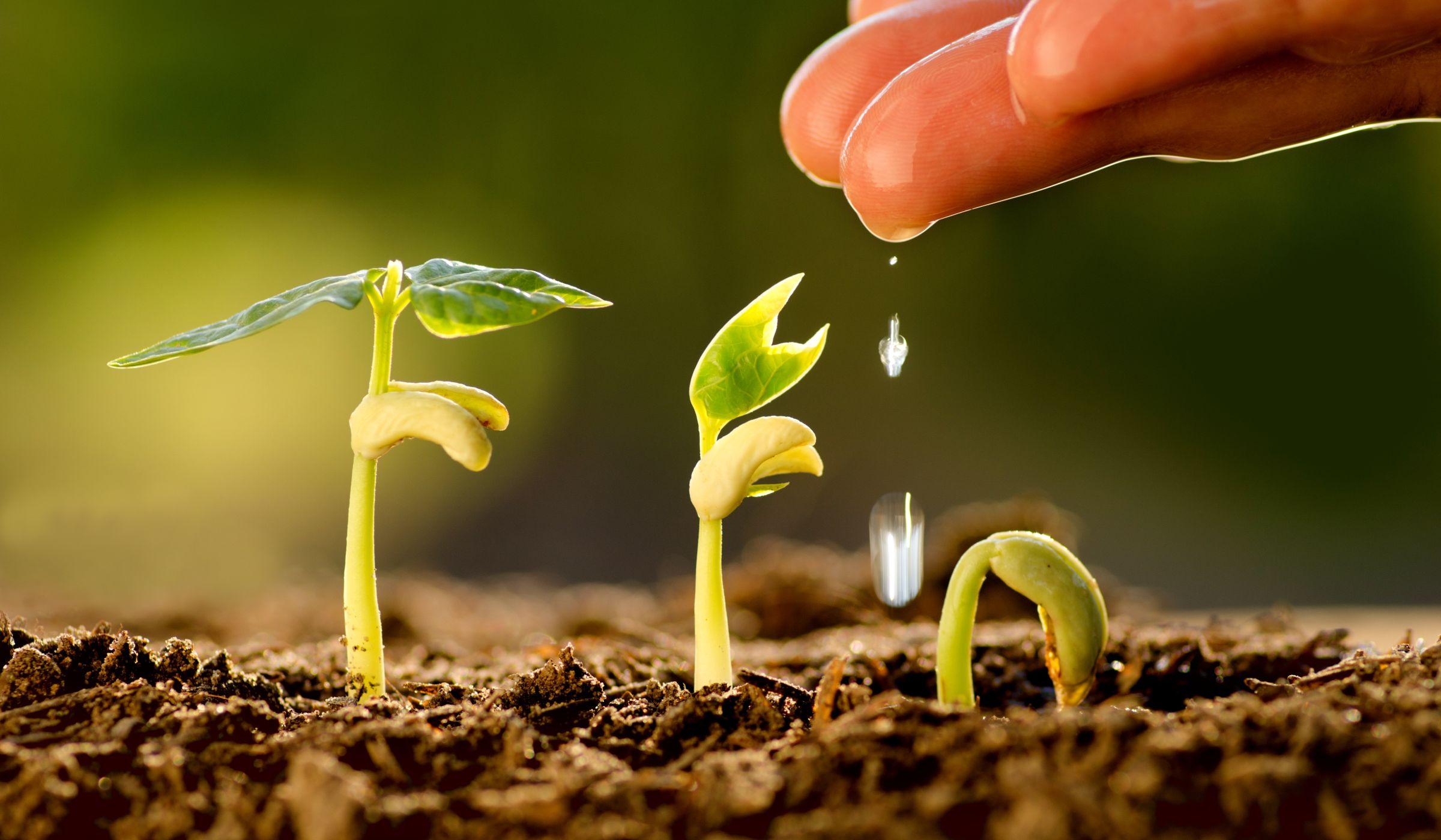 Купить стимулятор роста и другие препараты для растений на выгодных условиях на сайте «Солантис Украина»