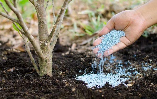 Удобрение почвы от А до Я: какие работы нужны осенью и весной