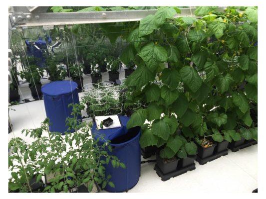 Экологичные и простые в использовании системы гидропоники