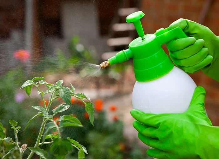 Как защитить урожай от грибковых болезней