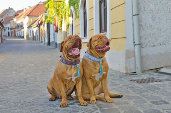 Ошейники для собак: типы изделий и требования к ним
