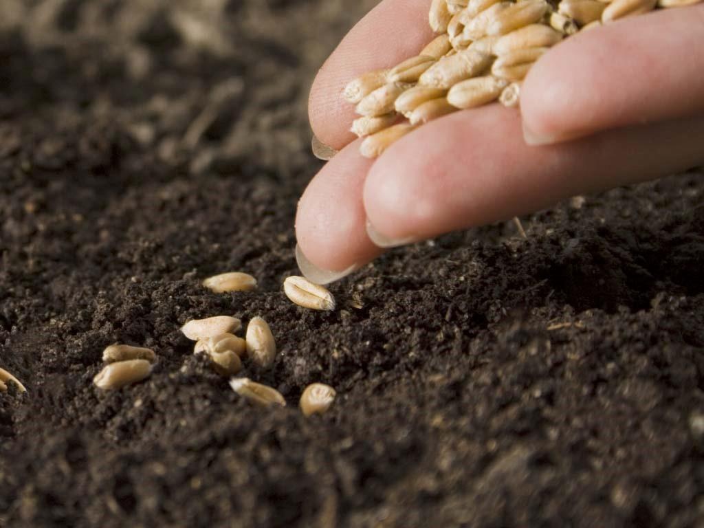 Как выбрать семена для нашего сада: 15 советов от специалиста