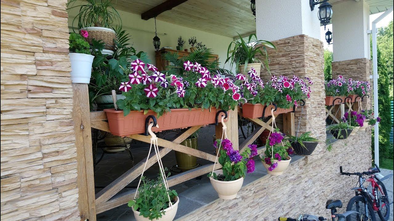 Выращивание ампельных растений в подвесных горшках