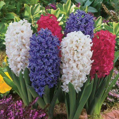 Практические советы по посадке семян и луковиц цветов